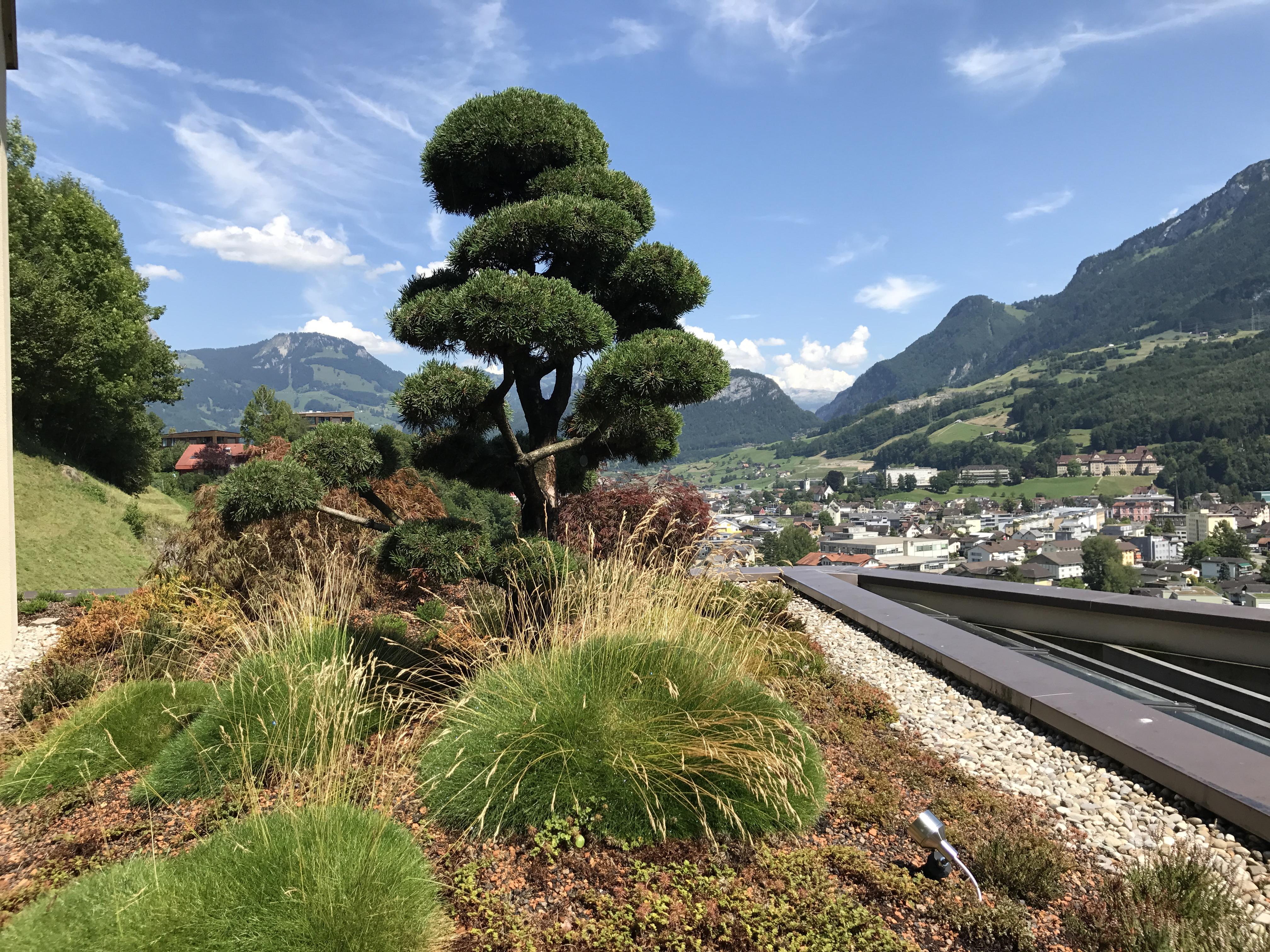 Gartenbau Einfamilienhaus Schwyz 1