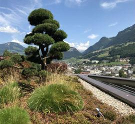 Gartenarbeiten und Steinarbeiten Einfamilienhaus Schwyz